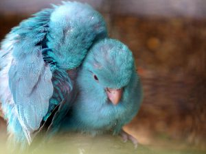 Голубые катаринки