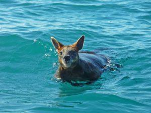 Хороший пловец