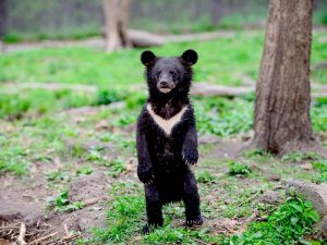 Медведь как столбик