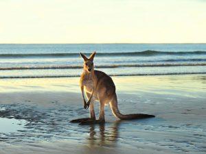 Где живут кенгуру