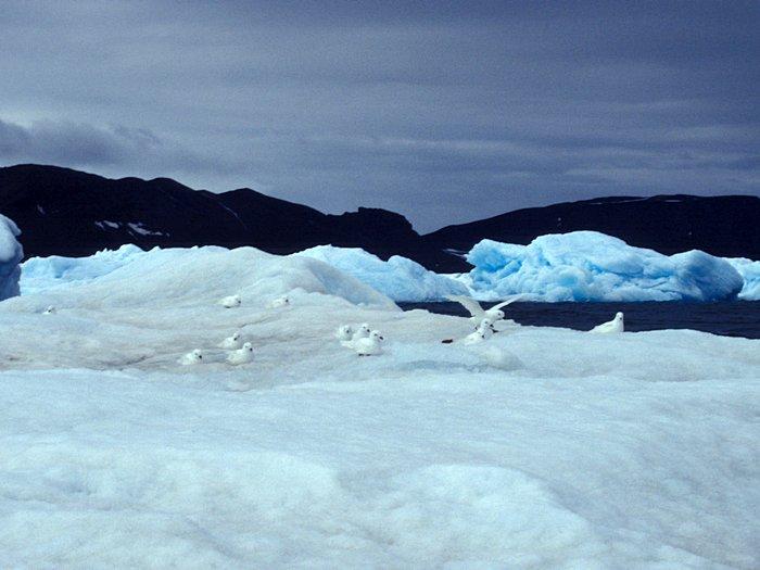 На айсберге