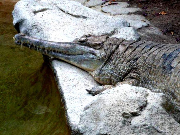 Необычный крокодил