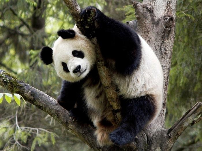 Гимнастика панды