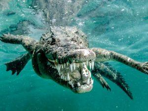 Подводный хищник