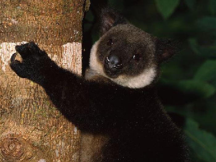 Полез на дерево