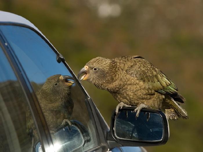 Разбойник с крыльями
