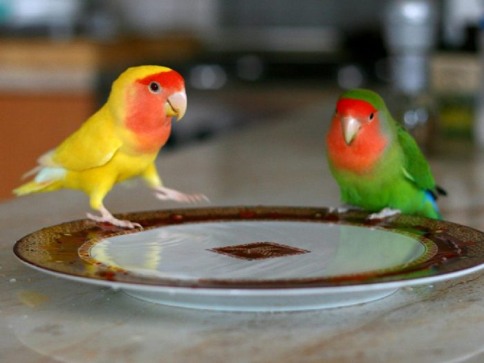 Разноцветная пара