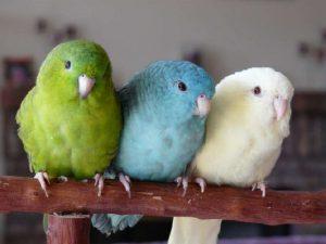 Разноцветные катарины