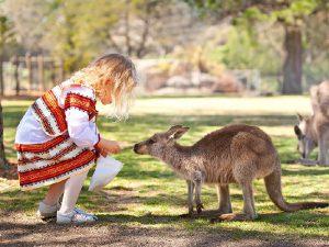 Ручной кенгуру