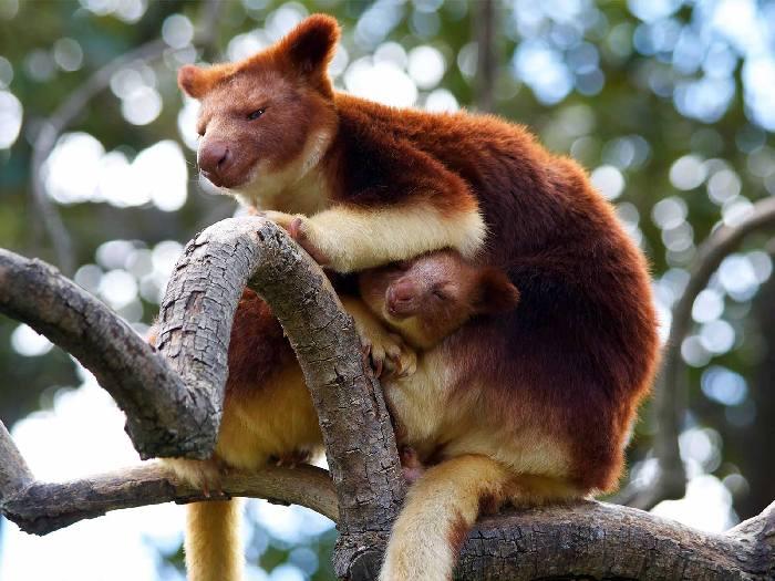 С детенышем по деревьям