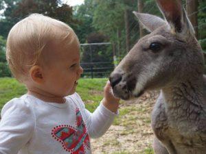 Серый кенгуру и дети
