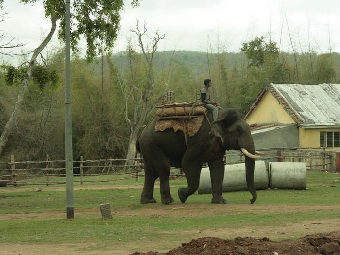 Рабочий слон