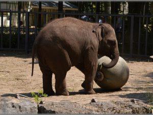Слон и мячик