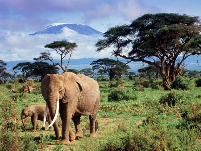 Слоны и Килиманджаро
