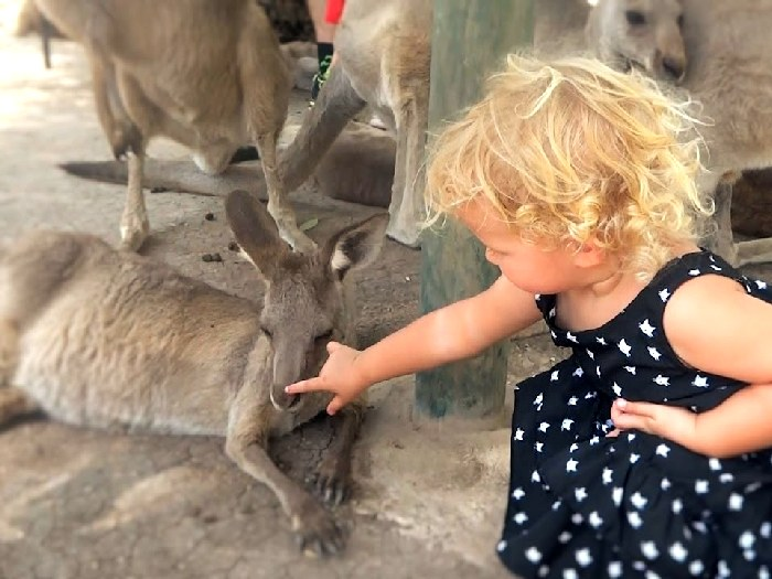 В парке кенгуру