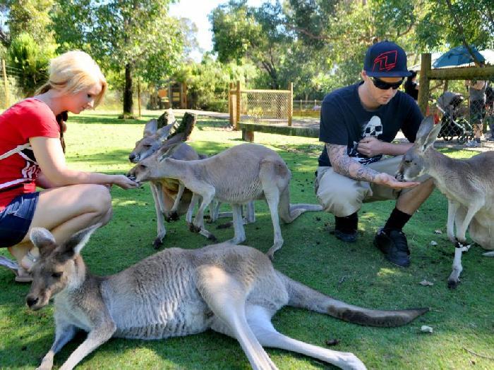 В зоопарке кенгуру