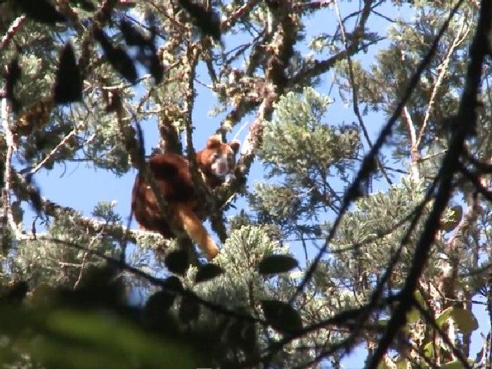 Высоко на дереве