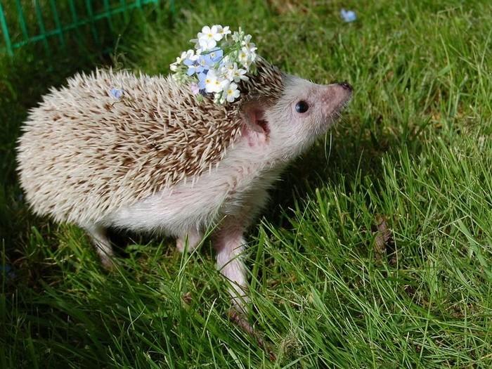 Ежиха с цветами