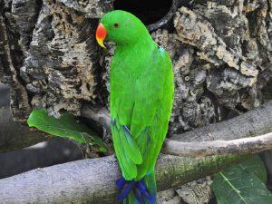 Зелёный красавец