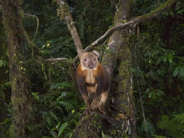 Житель леса