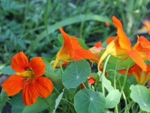 Цветы для балкона цветущие все лето