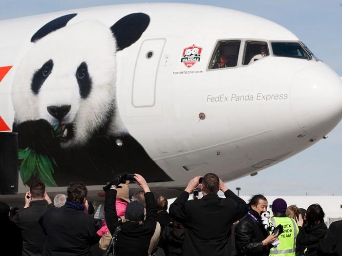 """Китайские панды """"Жуи"""" и """"Диндин"""" прилетели в Москву"""