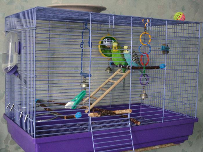 Волнистые попугаи обустройство клетки фото
