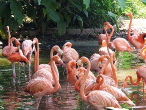 Цвет фламинго