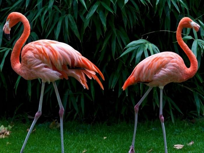 Фламинго под угрозой