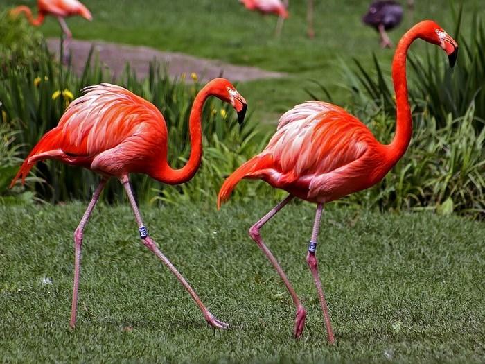 Симпатичные фламинго