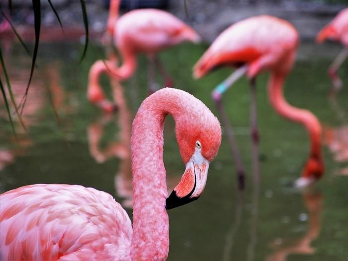Удивительные фламинго