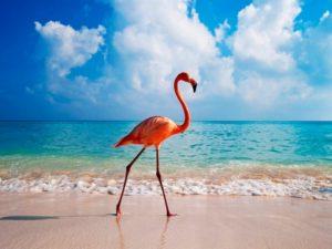 Розовая птица