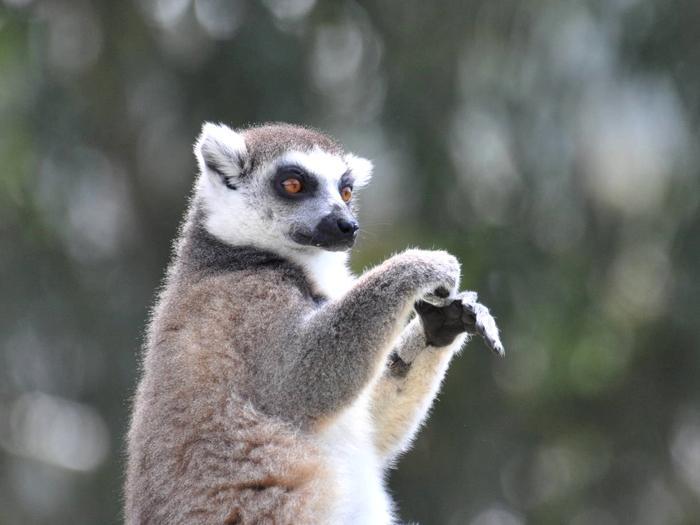 Житель Мадагаскара