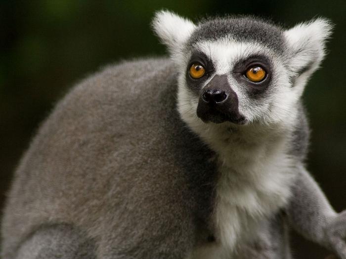 Обитатель Мадагаскара