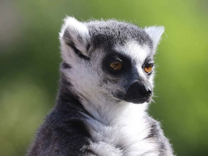 Абориген Мадагаскара