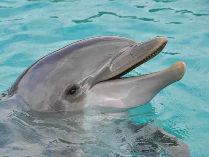 43 вида дельфинов