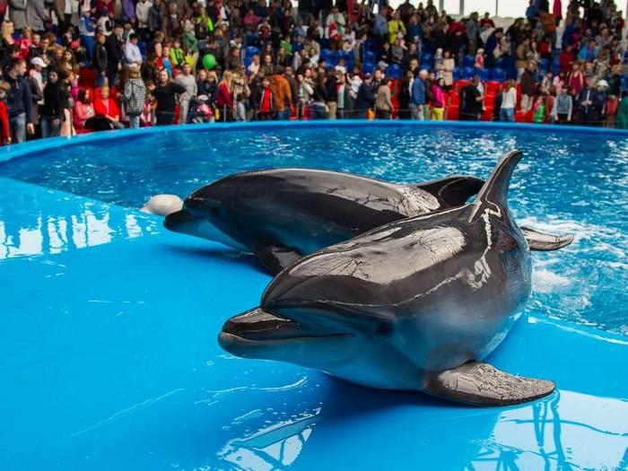 факты о дельфинах