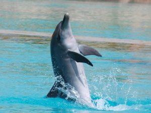 Дельфин защитник