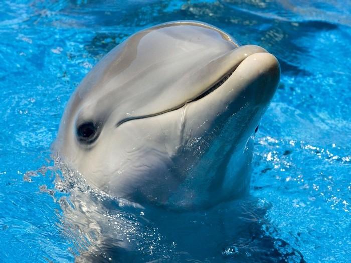Где посмотреть дельфинов и китов