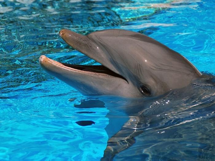 интересные факты о дельфине для детей