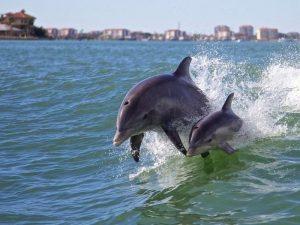 Дельфины у побережья