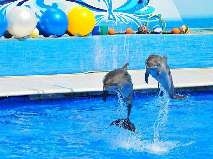 Крымские дельфинарии