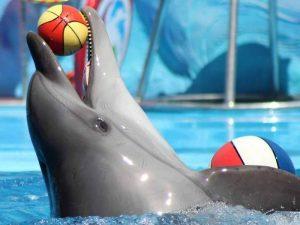 Дрессированный дельфин