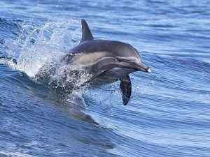 Скорость дельфина