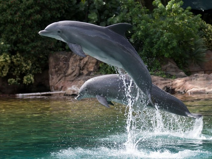 Дельфины у берега
