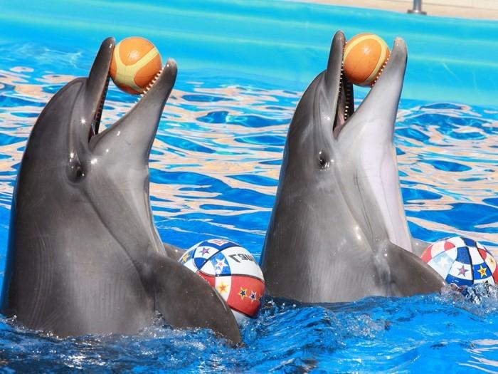 Дельфины с мячами