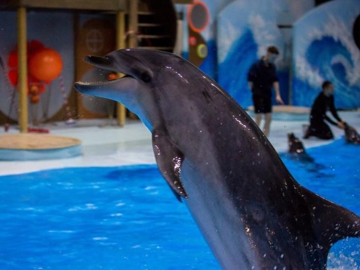 Дельфин в дельфинарии