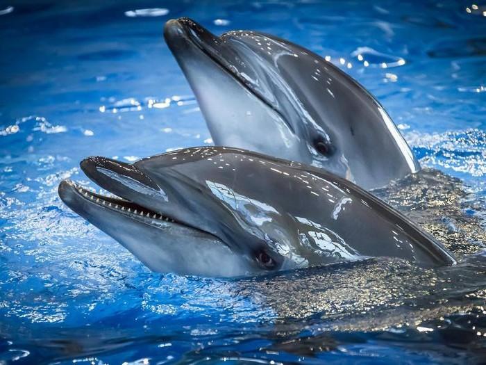 Интересные факты о дельфинах для детей. 41 факт о дельфине