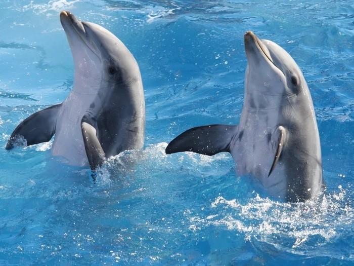 Имя дельфина