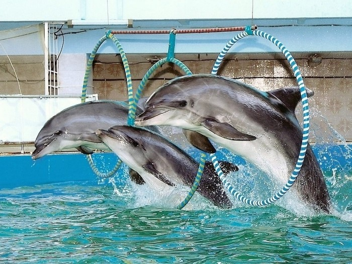 Какие есть дельфинарии в Крыму